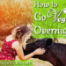 How To Go Vegan Overnight: My Tips for Going Vegan Cold Turkey